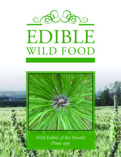 Wild Edible Subscription