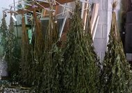 Hang Drying Plants