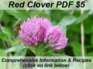 red clover picture