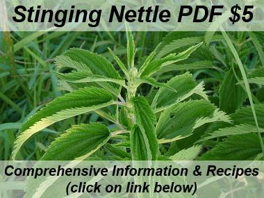 stinging nettle image