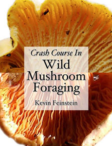 Course in Mushroom Foraging