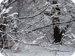 Winter Wild Edibles