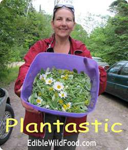 Plantastic!
