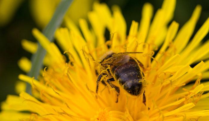 Pollinator Wild Plants