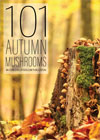 Autumn Mushrooms