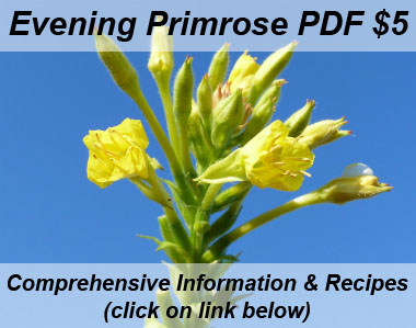 evening primrose pictures flowers leaves and identification