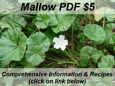 mallow picture