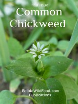 Chickweed Magazine