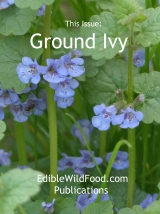 Ground Ivy Magazine