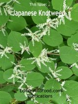 Japanese Knotweed Magazine