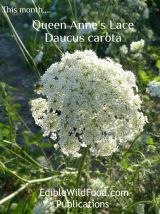 Queen Anne's Lace Magazine
