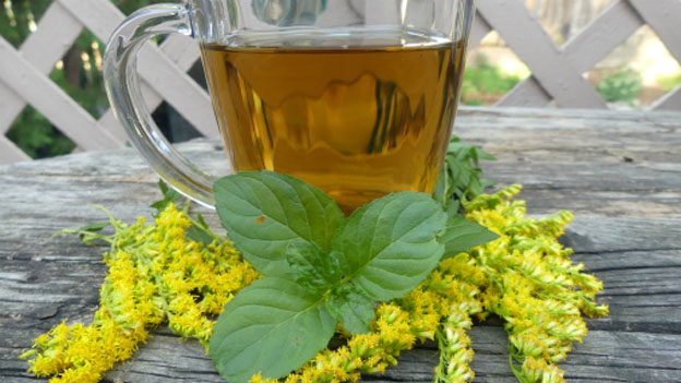 Minty Goldenrod Tea