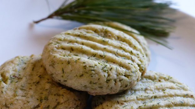 Pine Cookies Recipe Free Recipe from Edible Wild Food
