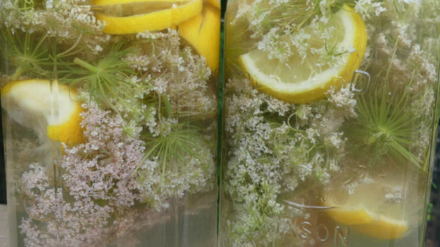 Queen Anne's Lace Cordial