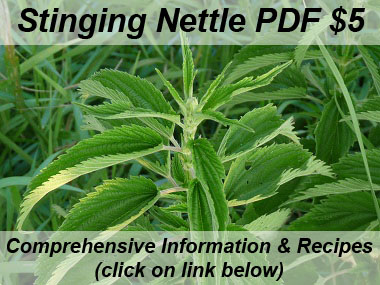 Stinging Nettle: Pictures, Flowers, Leaves and