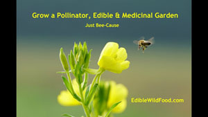 Grow a Pollinator, Edible and Medicinal Garden
