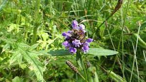 How to Identify Selfheal