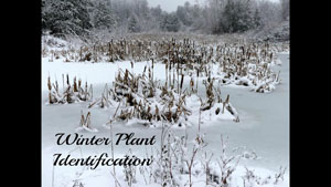 Identifying Wild Plants in Winter