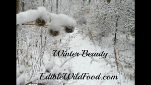 Winter Beauty and Wild Edibles