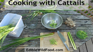 Cooking with Cattails