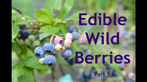 Edible Wild Berries - Part 1