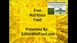 Edible Wild Plants Are Free, Nutritious Food