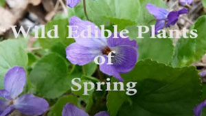 Wild Edible Plants in Spring